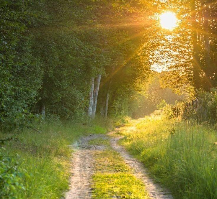 9 Steps into Feeling Free